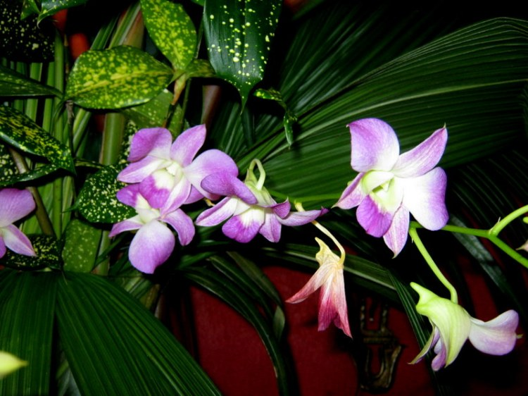 For joy in God's creation: orchids of Guatemala. (Juan Carlos Castillo)