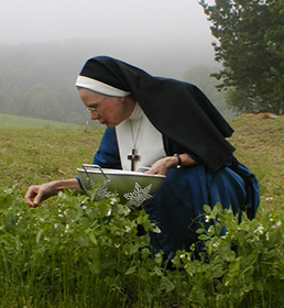 A member of the Community of St. Mary, East, picking peas in June 2012. Their dedication means to be a fundamental witness of living into and out of God's will — not just for themselves, but for the Church and the whole world. They aspire to be a model of Christian balance and simplicity as expressed in the Beatitudes.