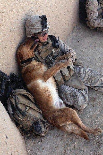 Soldier&Dog