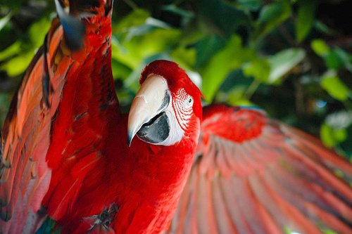 For joy in God's creation: a red macaw.
