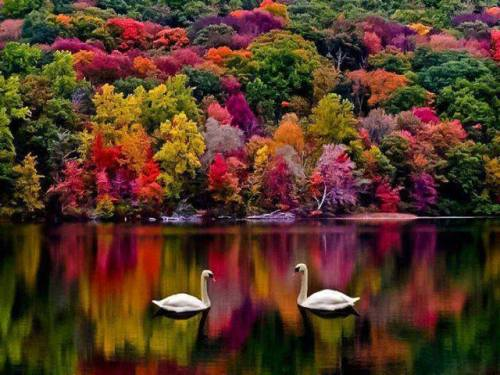 Autumn in New Hampshire. (Wonderful Places on Facebook)