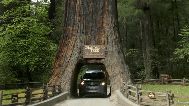 For joy in God's creation: California's redwood trees are so immense that we cannot comprehend them in a photo except by comparison with something more our size. (Mark Boster/Los Angeles Times)