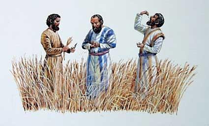 Jesus and his disciples eat grain on the Sabbath. (davidgospeldaily blog)