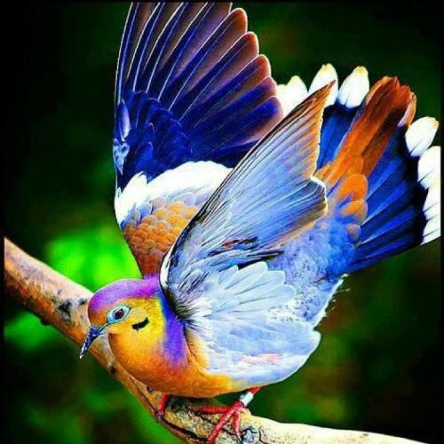 All birds of the air, glorify the Lord! (source unknown)