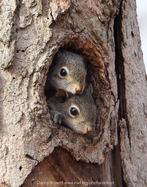 For joy in God's creation: squirrels, photographed by Danny Brown.