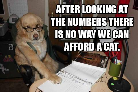 Accountant Dog