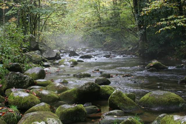 Mist over a stream in the Great Smoky Mountains National Park, USA, a few days ago. (Renick Taylor)
