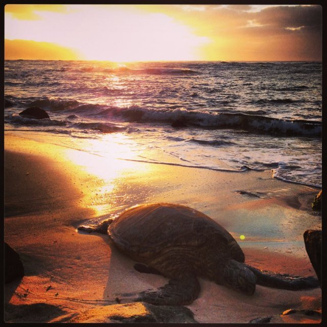 For joy in God's creation: giant sea turtle on the north shore of Oahu, Hawai'i. (source unknown)