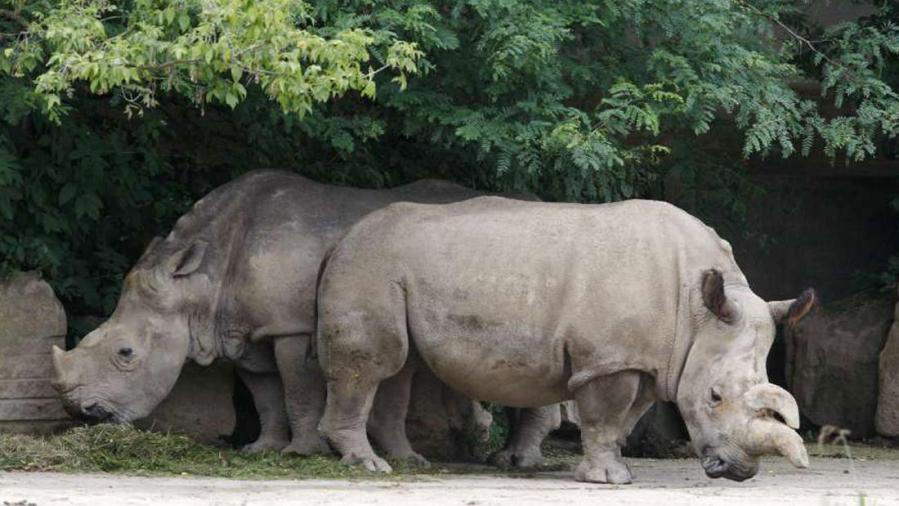 We publish joyful prayers about creation every Wednesday, but there's a dark side too – the mass destruction of species, habitats and the planet itself. These Northern white rhinoceros are two of the last five left. The others have been victims of a kind of animal genocide. The main culprit, according to reports, is demand for rhinoceros horn in Vietnam. (Petr David Josek)