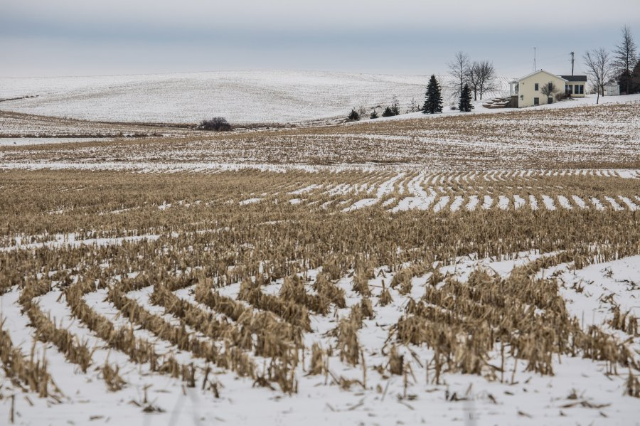 For joy in God's creation: cornfield in Iowa. (Tony Cenicola/The New York Times)