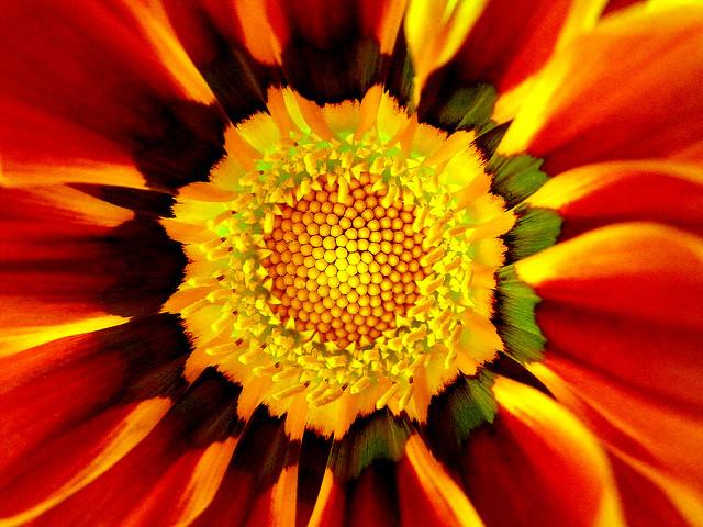 Flower mandala; source unknown