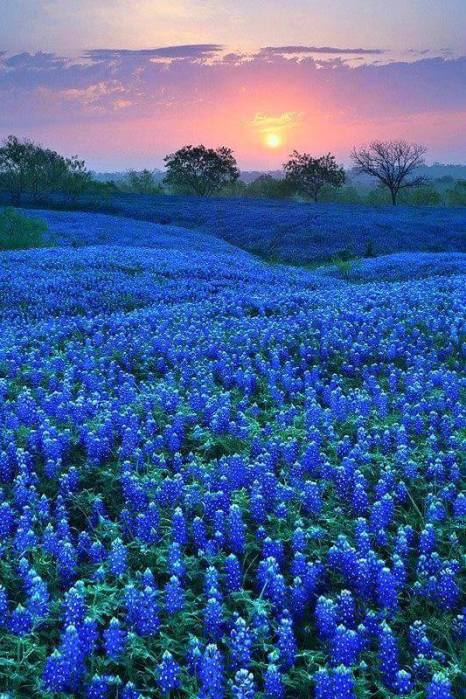 For the beauty of the Earth: you know spring has come to Texas when the bluebonnets appear. (Globe Aware)