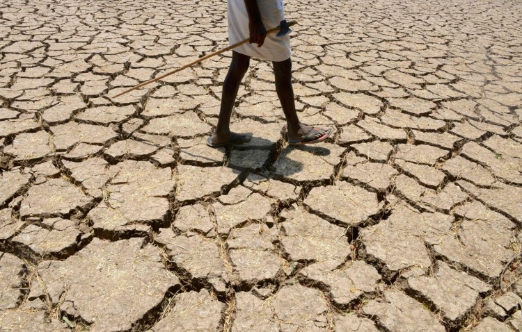 Drought is affecting an estimated 330 million people in 10 states in India, like this cotton field near Hyderabad. To make matters worse, politicians in Maharashtra have been allowed to build sugar factories, leading farmers to put their fields into sugar cane, one of the worst water-guzzling crops. Now reservoirs are empty, wells a thousand feet deep are running dry, groundwater is depleted, water has to be trucked in to cities and towns, farmers are in debt and losing their land, tens of thousands have left to try to find work in the cities, those who are left are losing hope and scores have committed suicide. Drought is obviously terrible - but greed makes everything worse. (Noah Seelam/AFP)