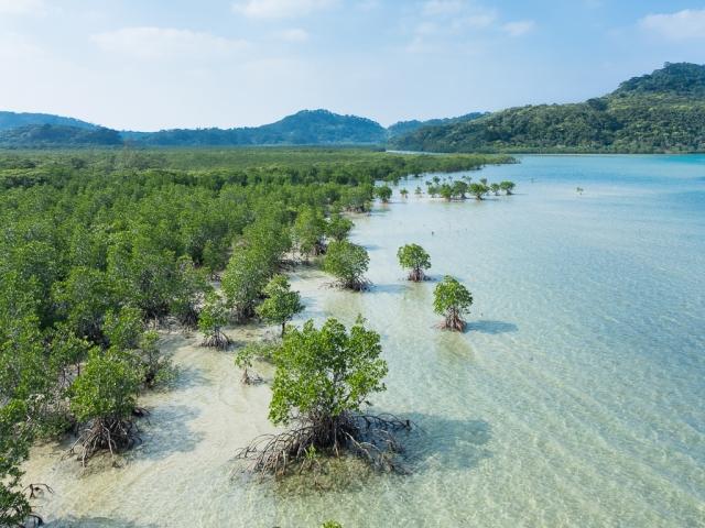 For joy in God's creation: Mangrove swamp, Iriomote Island, Okinawa, Japan. (Wikipedia)