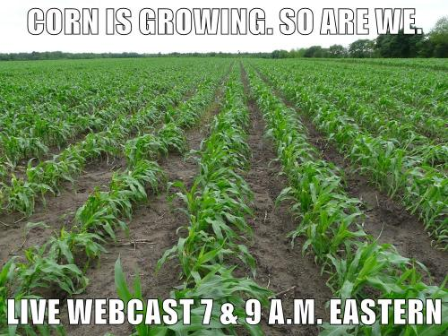 Corn Is Growing Webcast