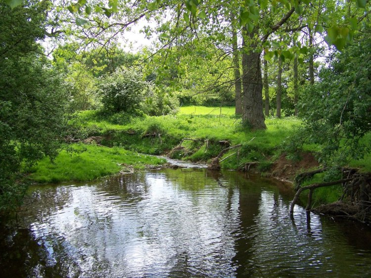 For joy in God's creation: the River Beane at White Hall, Hertfordshire, not far from St. Alban's. (thelensflare.com)