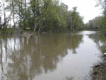 Iroquois River at Kentland, Indiana: mud creek. (U.S. Geological Survey)
