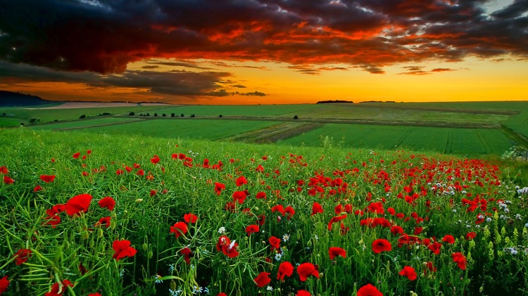 Glorify the Lord, you flowers, fields and clouds: give praise and honor for ever. (anzaq.com)