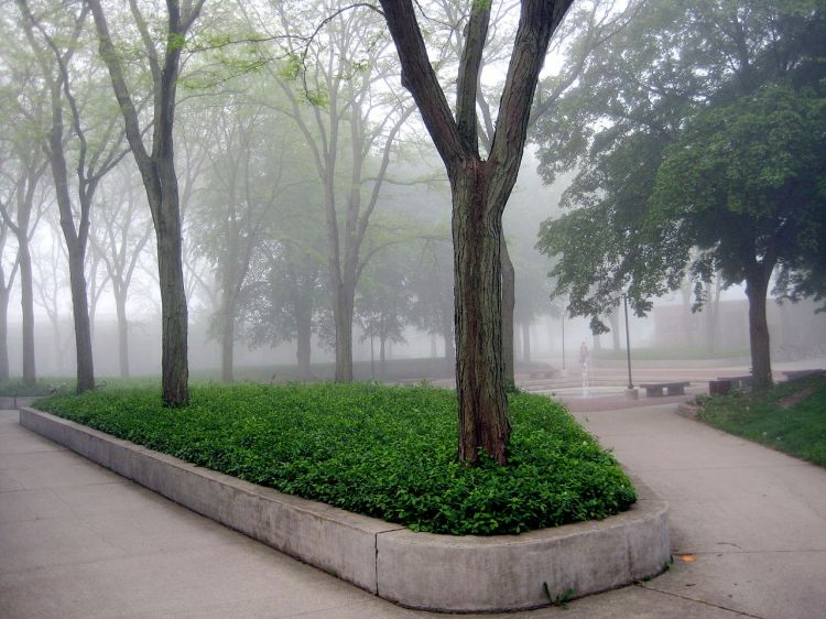 For joy in God's creation: morning fog over the Goshen College Quad, Indiana. (college photo)