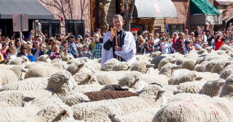 Fr. Ken Brannon blessing a thousand sheep on St. Francis's Day in Ketchum, Idaho: Glorify the Lord, O beasts of the wild, and all you flocks and herds! (Mike Patterson)