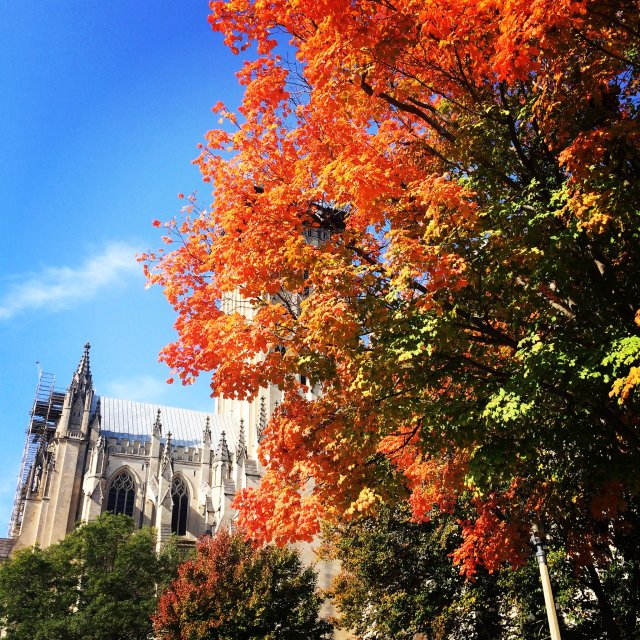 Autumn at Washington National Cathedral: sing praise and give honor for ever! (All Hallows Guild)