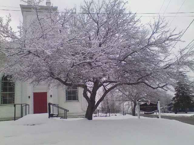 St. John's, Catharine, New York, after an ice storm. What a gorgeous creature this tree is. (The Rev. Michael Hartney)